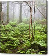 Forest Ferns On A Foggy Morning Canvas Print