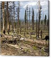 Forest Fire Aftermath Canvas Print