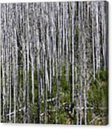 Forest Fire Sticks-2 Canvas Print