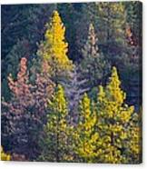 Forest Foliage  Canvas Print