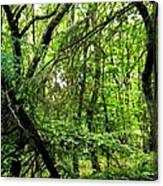 Forest In Denmark Canvas Print