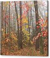 Forest In Late Autumn Canvas Print