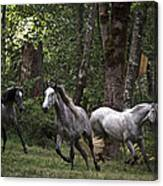 Forest Mares Canvas Print