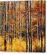 Forest Of Gold Canvas Print