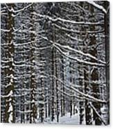 Forest Of Marburg In Winter Canvas Print
