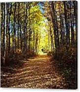 Forest Path In Autumn Canvas Print