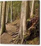 Forest Pathway, Whistler, British Canvas Print