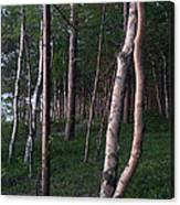 Forest, Shore Of Lake Superior Canvas Print