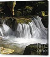 Forest Stream 2a Canvas Print