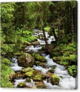 Forest Stream In Tatra Mountains Canvas Print