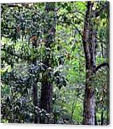Forest Trees Canvas Print
