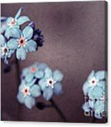Forget Me Not 01 - S05dt01 Canvas Print
