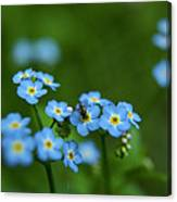 Forget-me-nots In Treman State Park, Ny Canvas Print