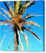 Fornells Palm Tree  Canvas Print