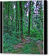 Forrest Trail Canvas Print