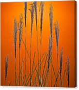 Fountain Grass In Orange Canvas Print