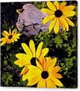 Four Black Eyes Canvas Print