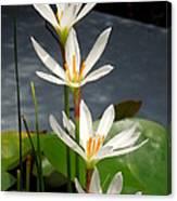 Four Tall Marsh Grass Blooms Canvas Print