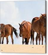 Four Wild Mustangs Canvas Print