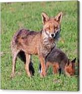 Fox And Baby Canvas Print