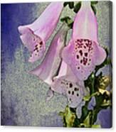 Fox Glove Blue Grunge Canvas Print
