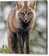 Fox Near Reflection Lake Canvas Print