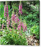 Foxgloves In My Garden Canvas Print
