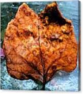 Foxy Leaf Canvas Print