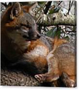 Foxy's Naptime Canvas Print