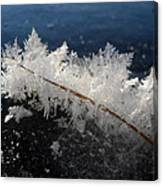 Fractal Frosty Ice Crystals Canvas Print