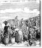 France: Grape Harvest, 1854 Canvas Print