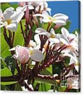 Frangipanier - Plumeria - Ile De La Reunion - Reunion Island Canvas Print