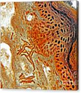 Free Nerve-endings, Epidermis Canvas Print
