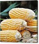 Fresh Corn Canvas Print