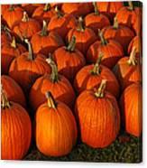Fresh From The Farm Orange Pumpkins Canvas Print