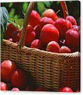 Fresh Red Plums In The Basket Canvas Print