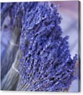 Fresh Russillon Lavende Canvas Print