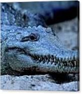 Freshwater Crocodile Canvas Print
