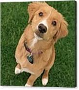 Friendly Dog Canvas Print