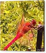 Friendly Dragon Fly Canvas Print