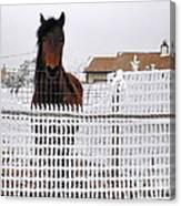 Friendly Horse Canvas Print