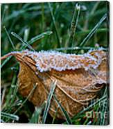 Fringed In Frost Canvas Print