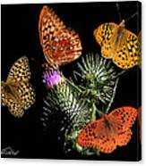 Four Fritillaries Canvas Print