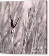 Fritillary Fields Canvas Print