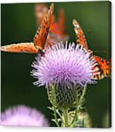 Fritillary Wings And Thistles Canvas Print