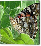 Frittary Among The Green Canvas Print