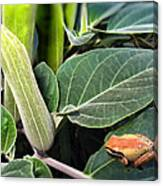 Frog And Moonflower Canvas Print