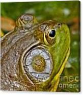 Frog Eye Canvas Print
