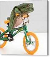 Frog On A Bicycle Canvas Print