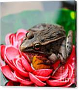 Frog On Lily Pad Two Canvas Print
